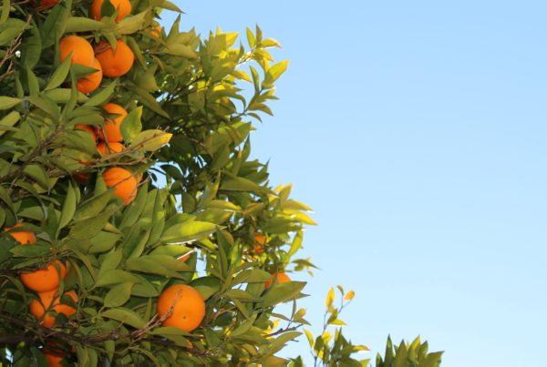 the-orange-themenectar